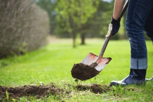 Gardening, digging ground with a shovel.